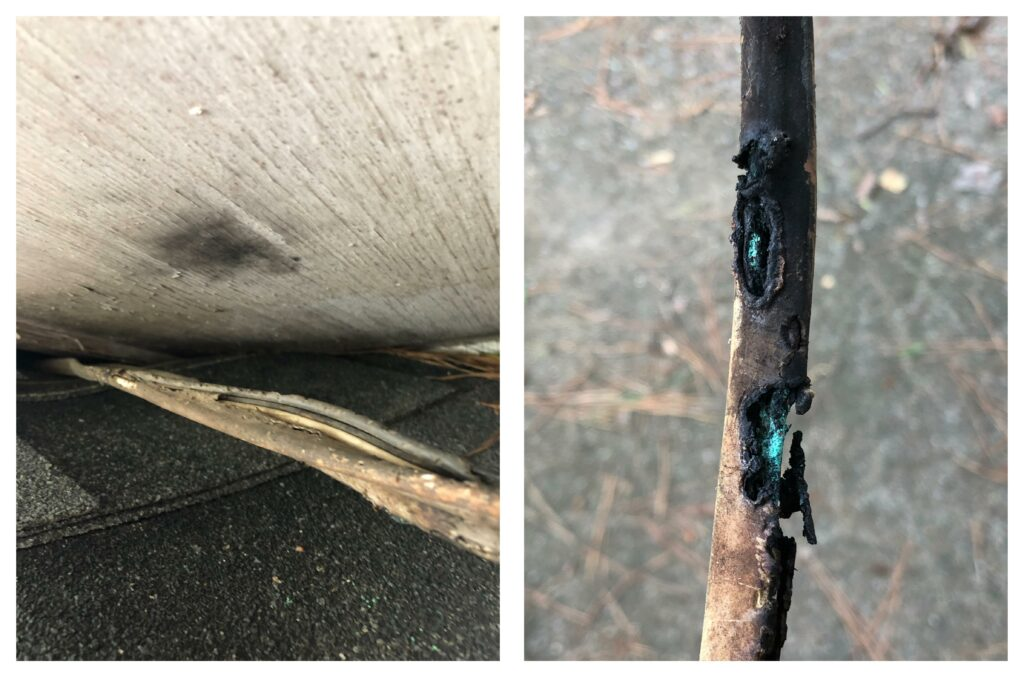 Rotted electrical cable insulation running from outside the home into the attic, with dried pine needles nearby.  Includes closeup of wire damage and prior arcing or fire activity.